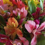 flowers-998648_640