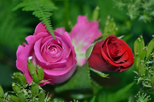 roses-208980_640